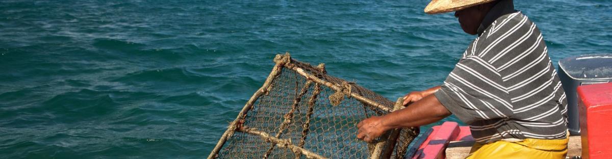 Pêche au casier